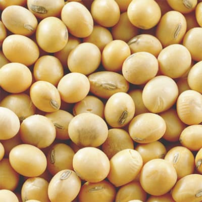 Close-up of soy beans.